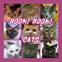 boon!boon!cats_125-125.png